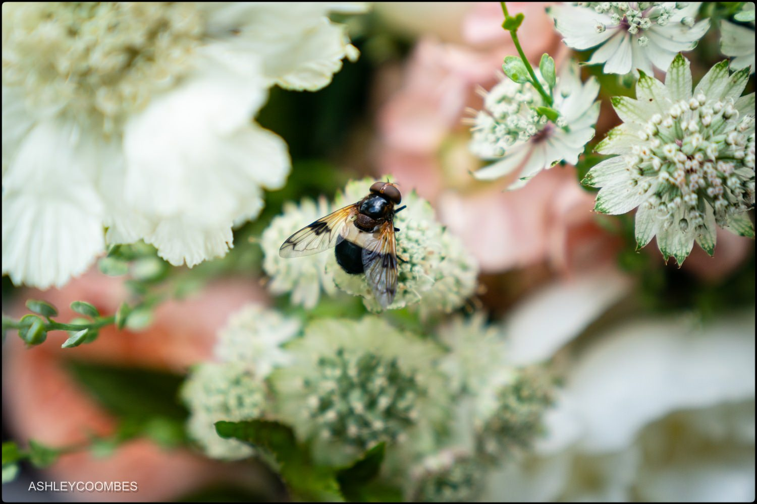 bee on bouquet